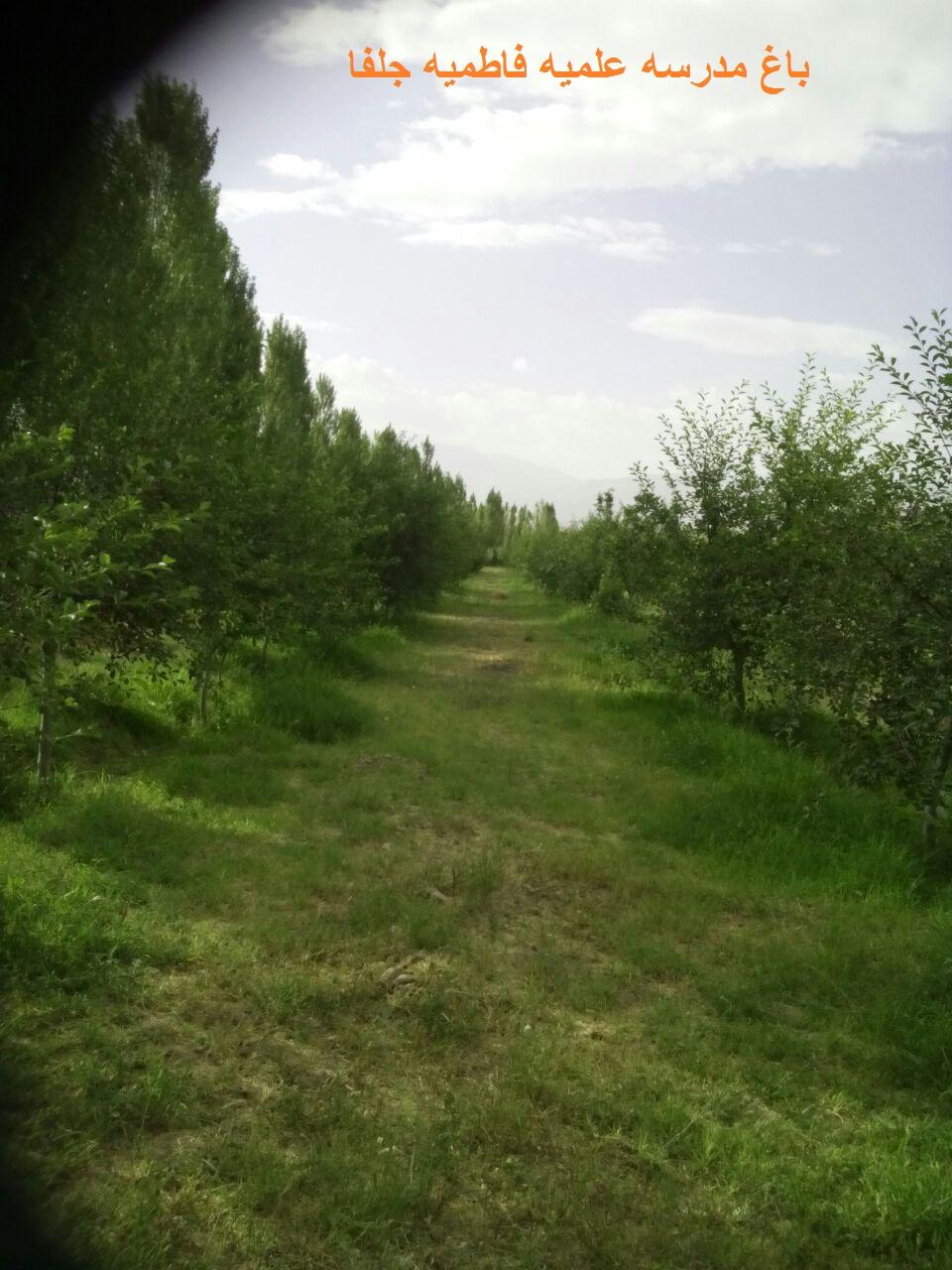 درختان مدرسه علمیه فاطمیه جلفا
