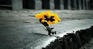 امیدتوسل زیبایی شفا