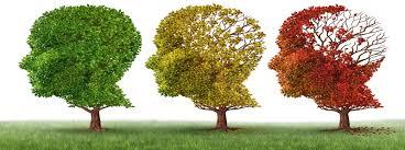 راههای تقویت حافظه