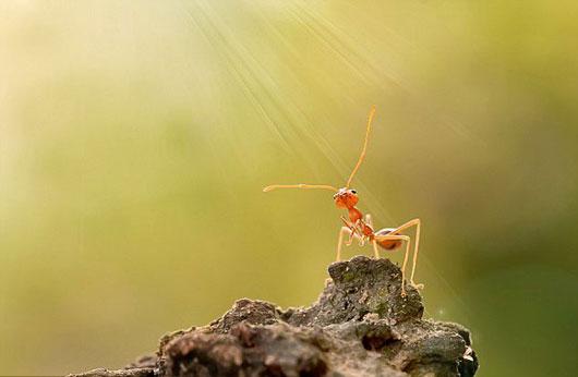 مورچه-خدا-راه-نجات-سنگ-رودخانه